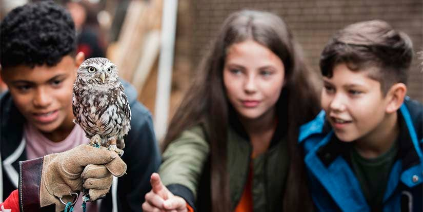 Young students observe a handler holding an small owl.
