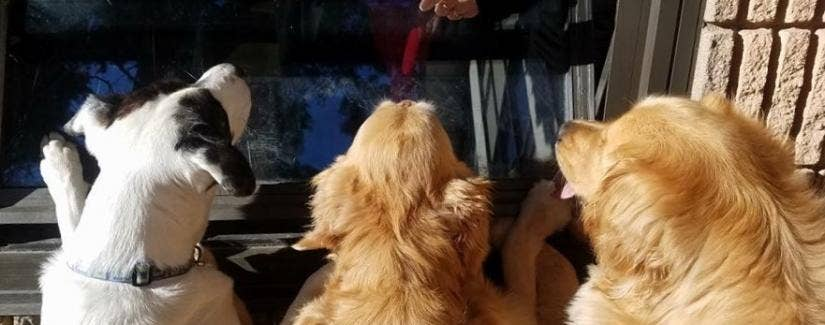 Dogs Visit This Teacher's Classroom Window