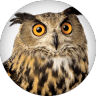 Sage official spokes owl and mascot of Western Governors University