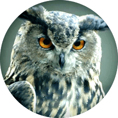 Sage, official spokes owl and mascot of WGU